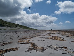 Askernish Beach (World of Izon) Tags: sky seaweed clouds scotland outer oyster catcher hebrides southuist outerhebrides askernish