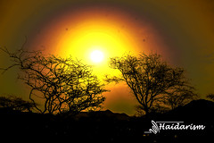 Trees and Sun (haidarism (Ahmed Alhaidari)) Tags: trees sunset sun mountains hot tree art nature silhouette landscape desert natural outdoor sony creative earlymorning heat create  saudiarabia artisitc        a65   xcreation