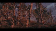 Morning in the Marshes (preeum) Tags: screenshot games elder scrolls skyrim tesv