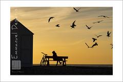 Miss Singing a song to the Birds (Emmanuel DEPARIS) Tags: mer beach de bay nikon le sur cote emmanuel oiseaux baie somme d4 cayeux mers crotoy picarde dopale deparis