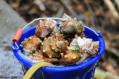 慕谷慕魚 (阿明仔的鏡頭世界) Tags: 花蓮 銅門 木瓜溪 秀林鄉 清水溪 慕谷慕魚