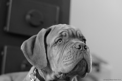 What's that? (Martin Werge Nissen) Tags: bw fall dof indoor maximus canon50mm18 doguedebordeaux