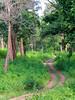 wayanad wildlife way (raghphotography) Tags: wyanad raghphotography kerala forest canon ragh 520hs wayanadwildlifesanctuary wildlifeway