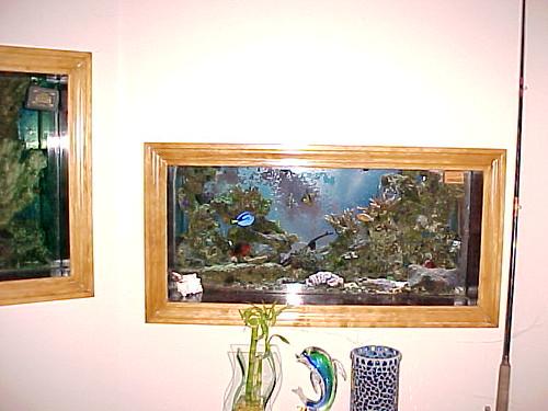38 gallon reef