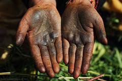 Cannabis resin on hand palms (f/4) Tags: india manali cannabis himachal tosh kullu hashish pradesh charas parvati