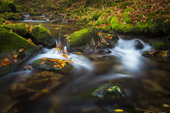 Flow (Sijie Shen) Tags: autumn trees black color leaves horizontal forest germany landscape europe long exposure image schwarzwald oppenau