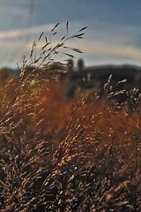 Gras in St. Märgen 1-1 (GhostOfDorian) Tags: canon germany deutschland kirche gras morgen schwarzwald blackforest kloster badenwürttemberg grashalm stmärgen sigmazoom eos600d