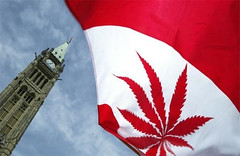 Canada Officially Begins Step Toward Legalizing Marijuana (ganjababy420) Tags: canada step marijuana begins toward officially legalizing