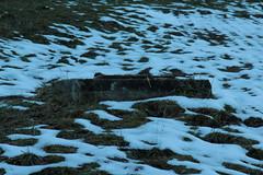 Schacht auf Wiese bei Heustrich Strick im Kandertal im Berner Oberland im Kanton Bern der Schweiz (chrchr_75) Tags: christoph hurni chriguhurnibluemailch chrchr chrchr75 chrigu chriguhurni dezember 2015 albumzzz201512dezember albumkleinesstachelschweinreduitbrigade21 reduit reduitbrigade 21 reduitbrigade21 landesverteidigung armee militr zweiter weltkrieg second world war