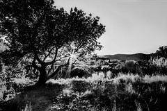 SUNSET IN MAGDALENA (Slawek A7) Tags: light sunset blackandwhite bw sun sunlight mountain tree monochrome grass leaves backlight landscape outside outdoors peace outdoor sunsets wideangle castellon xsi castelln 450d