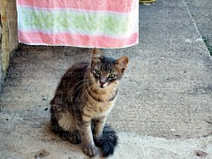 L'eleganza della micia (IlGiomba) Tags: cats fusa gattini animalidacompagnia