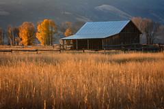 Mormon Row, Grand Teton (MarkWarnes) Tags: autumn fall barn farm wheat homestead grandteton grandtetonnationalpark mormonrow cottonwoodtrees moultonbarn mormonbarn moranjunction