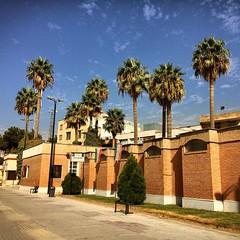 #palmy #pulm #tree #GoodDay #bluesky #نخل #درخت #آسمان_آبی (pezHman tt) Tags: palmy pulm tree goodday bluesky نخل درخت آسمانآبی