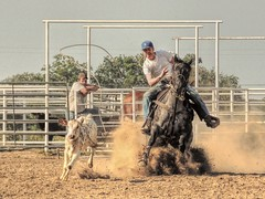 Caught Unkowningly (clarkcg photography) Tags: roping rope calf calves horses horse leather tack arena control rodeo practice