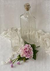 antique ( *..CAH.. * ) Tags: antique antiquepink carnation flower softlight softcolours romantic stilllife pastel
