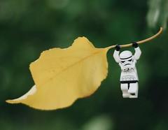 Landing  #starwars #stormtroopers #theforceawakens #lego #legostagram #brickcentral #toyslagram_lego #brickinsider #toydiscovery #toptoyphotos #toyplanet #minifigures #stuckinplastic #afol #instalego #toyslagram #bricknetwork #toygroup_alliance #jj_lego # (ozzhead*) Tags: autmn toyphotography lego stormtroopers starwars instagramapp square squareformat iphoneography