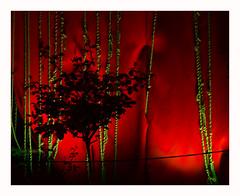 Rosier (hlne chantemerle) Tags: art sheilahicks tenture rouge vert nocturne rosier fleurs rue jardin musecarnavalet street museum night tapestry red green garden rose flowers