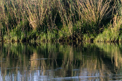 20160826_ZambeziReflectionsLandscapes_MCM (mcmessner) Tags: africa bjadventures grass morning morningboatride reflection rorschak southafrica2016 sunrise tongabezilodge water zambeziriver zambia livinstone