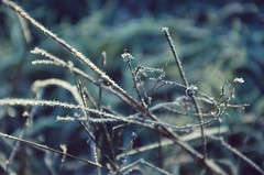 Little frost (anna.night) Tags: nature natura macro makro magic meadow blue frozen fairytale frost poland polska photo photography photos plants zima winter colors color cold nikon d7000