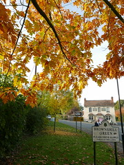 Red Oak. Brownshill Green. 31Oct '16. (Imagine Bill) Tags: allesley coventrywestmidlands westmidlands coventry redoak whitelion brownshillgreen wallhillroad mary joy ancientarden