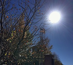 This is the #day that the #Lord has #made; let us #rejoice and be #glad in it - #Psalm #Autumn #Sunlight #Foliage #FeelAlive #Grateful (AmeliaPhotoAme) Tags: day lord made rejoice glad psalm autumn sunlight foliage feelalive grateful
