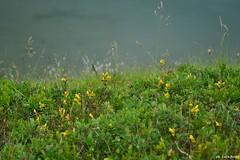 9-7-16 Bargetana (1) (bosilucabasilio) Tags: fiori flowers prati colori natura verde prato pianta fiore paesaggio campo allaperto profondità di aiuola persone
