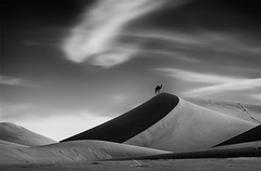 Camel on the dunes (Brian L55) Tags: morocco mhamid dunes mono camel sky