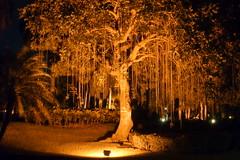 Luz Nocturna / Night Light (drlopezfranco) Tags: republicadominicana puntacana tree rbol noche night light luz plant planta