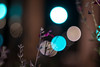 Carl Zeiss Jena Biotar 2/58 (::Lens a Lot::) Tags: carl zeiss jena biotar 58mm f2 10 blades m42 night bokeh depth field street photography flower color blue pink red yellow green vintage manual prime lens german profondeur de champ extérieur effet plante fleur