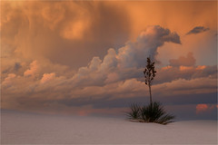 White Sands Sunset (Sandra OTR) Tags: white sands nationalpark yucca sunset clouds weather colorful thunderstorm sand desert new mexico solitude nature landscape alamogordo