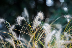 Dreamy Winter (LAK.Photography) Tags: nikon d8 d810 melaten kln cologne pflanzen unschrfe