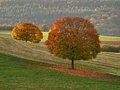 Side by side (heinrich_511) Tags: trees autumn tree field evening sun intheembraceoftheeveninglight horizon sidebyside love longing nostalgia leaves gold atmosphere mood light shadow call letter nature trier germany gm5 35100mm