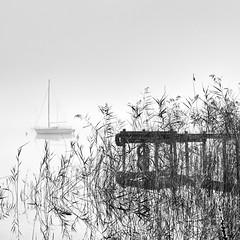 2016-10-31_10-07-56 (Pluie du matin) Tags: hatman nb bw carré squared landscape paysage lake lac hourtin france