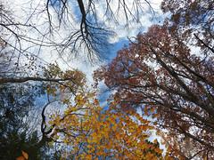 Always look Up (Lori Garske) Tags: asbury woods lorigarske trees autumn fall scene