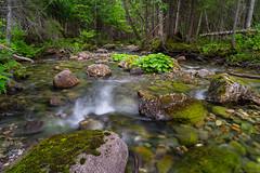 Ruisseau de montagne/Mountain stream/ro de montaa (Ceomga) Tags: claudehamel ruisseaucapseize gaspsie mountainstream monolythetourelle ruisseaucastor steanne steannedesmonts tourelle