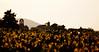 Roots (Puyméras, France 2011) (Alex Stoen) Tags: 120365 500px 5dmk2 agricultura agriculture alexstoen alexstoenphotography atardecer belltower campanario canon canoneos5dmarkii church collection creativefocus depthoffield ef70200f28lisusm eglise familia family flickr france grapeleaves grapes growth iglesia madurez maturity picasa picassa profundidaddecampo project365 provence pueblo puntodefuga puyméras raices riqueza roots spring steps sunset tesoros tipical town tradition treasures vaisonlaromaine vanishingpoint vignes vignoble village vin vino wine bokeh childhood clochet creativecomposition dof facebook puntodeenfoque