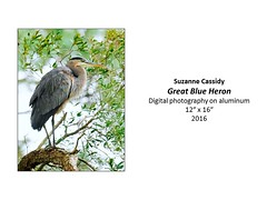 """Great Blue Heron • <a style=""""font-size:0.8em;"""" href=""""https://www.flickr.com/photos/124378531@N04/31064215771/"""" target=""""_blank"""">View on Flickr</a>"""