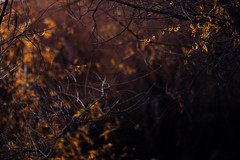 Fascination (miss.interpretations) Tags: branches trees bare winter cold chill mysterious graceful twisted leaves yellow orange castlerock colorado canonm3 fascination missinterpretations rachelbrokaw