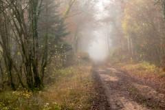 """""""La perfection est un chemin, non une fin"""" (proverbe coren) (Valentin le luron) Tags: 20161128 nikon 800 e fort nature paysage moiry vaud romandie suisse chemin automne brouillard yves paudex lausanne"""