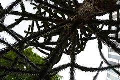 Toile d'araignée végétale (Fontenay-sous-Bois - Officiel) Tags: fontenay fontenaysousbois regionparisienne valdemarne iledefrance 94 94120 paris végétal outside france vert green