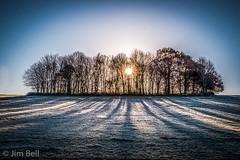 Frosty Shadows (itscosmicjim) Tags: sunrise frost derbyshire trees shadows cold woods jimbell lockopark winter sun