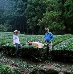 Mizumi Iro Green Tea (Tonx-) Tags: shizuoka japan hasselblad kodak portra greentea