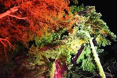 DSC04201 (Twareg) Tags: 2016 aboretum bpw enchanted forest westonbirt bathphotowalk gloucestershire england