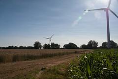 20130720_IMG_0147 (anriro96) Tags: elements heemsen nienburg feld ernte gras getreide blau blue sky rohrsen weser sun summer