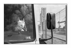 Lorient zone portuaire (Punkrocker*) Tags: street dog film port lens 50mm reflex harbour bretagne nb contax 100 agfa ml yashica apx aria lorient 5014 kergroise bwfp