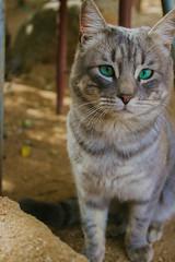 Gatuno (PhotosFran) Tags: chile animals canon calle arte amor gatos soul animales camaras calidad chilenos gatunos garritas canonistas canont3i canoncams