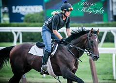 McGaughey Trainee (EASY GOER) Tags: horses horse ny newyork sports race canon track running racing 5d athletes races thoroughbred equine belmontpark markiii