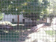 20150919_114219 (mjfmjfmjf) Tags: oregon zoo 2015 greatcatsworldpark