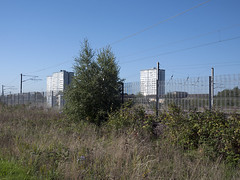 Railway land (P_L_Wood) Tags: park london railway birch gillespie finsburypark silverbirch northlondon harvistestate