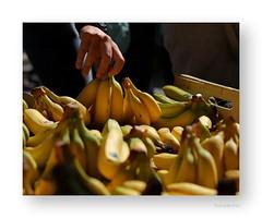 "... vous en récolterez les fruits. • <a style=""font-size:0.8em;"" href=""http://www.flickr.com/photos/88042144@N05/21150936672/"" target=""_blank"">View on Flickr</a>"